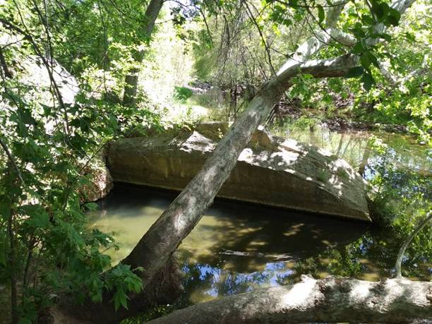 Montezuma's Well 3, Rimrock, AZ