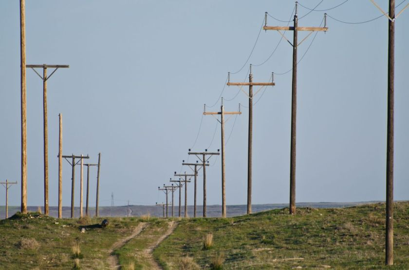 27726846 - utility poles standing in the desert