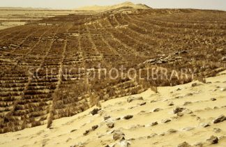 Vegetation barriers to stabilize migration of longitudinal (seif) sand dunes in the Qaidam Basin, a high altitude desert, in Qinghai Province, China.