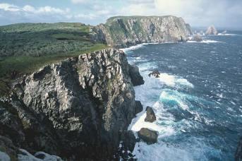 Snares Islands 3