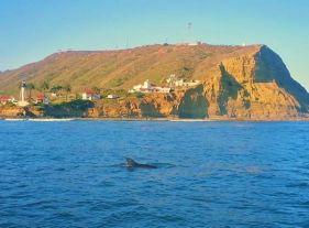 Guadalupe Island 3