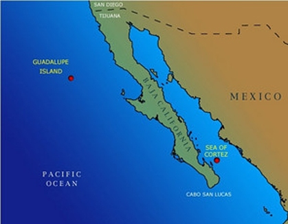 Guadalupe Island Map