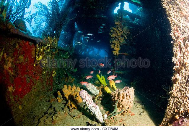 Coral on Sunken Ship