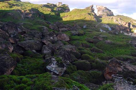 Kermadec Islands - Cheeseman Island