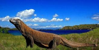 West Timor - Komodo Island 2